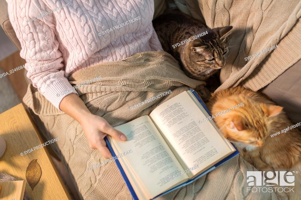 Imagen: red and tabby and owner reading book at home.