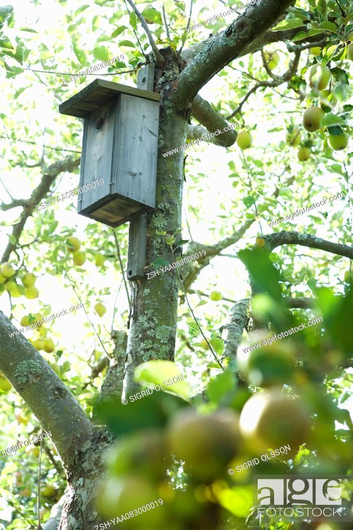 Stock Photo: Birdhouse in apple tree.