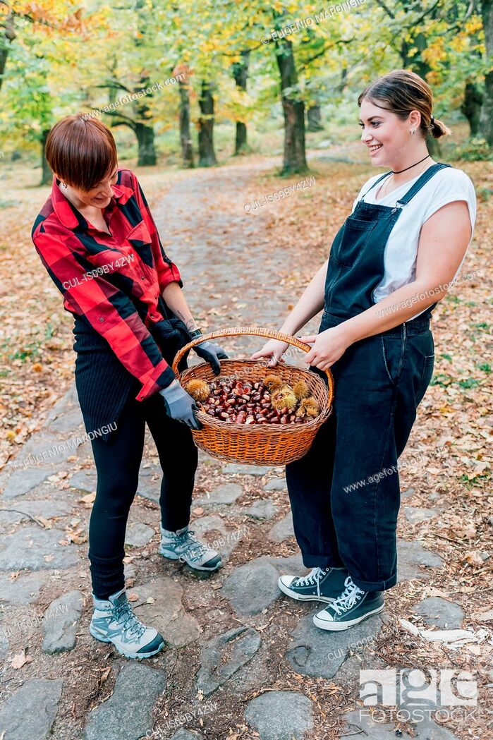 Stock Photo: Best friends collecting chestnuts, Rezzago, Lombardy, Italy.