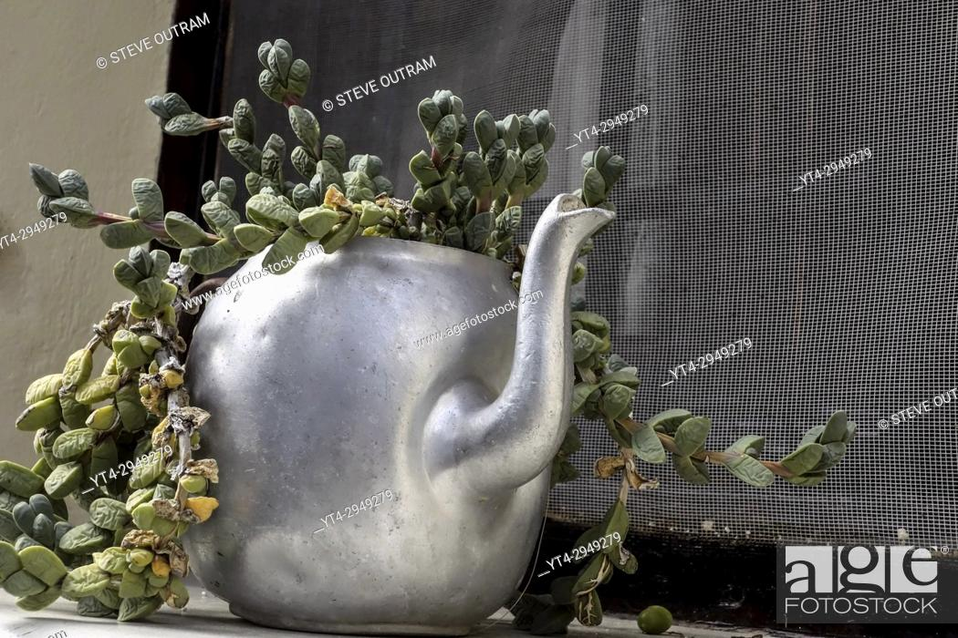 Stock Photo: Old Teapot used as a Plant Pot.