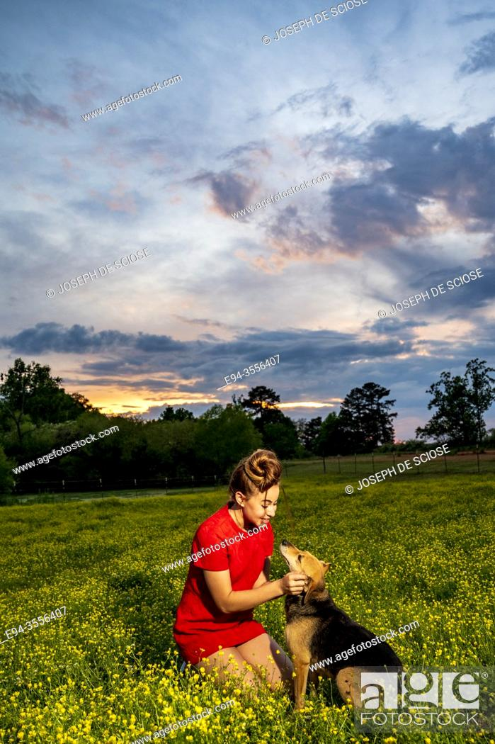 Stock Photo: A 14 year old brunette girl playing with a dog in a field of buttercups flowers at sunset.