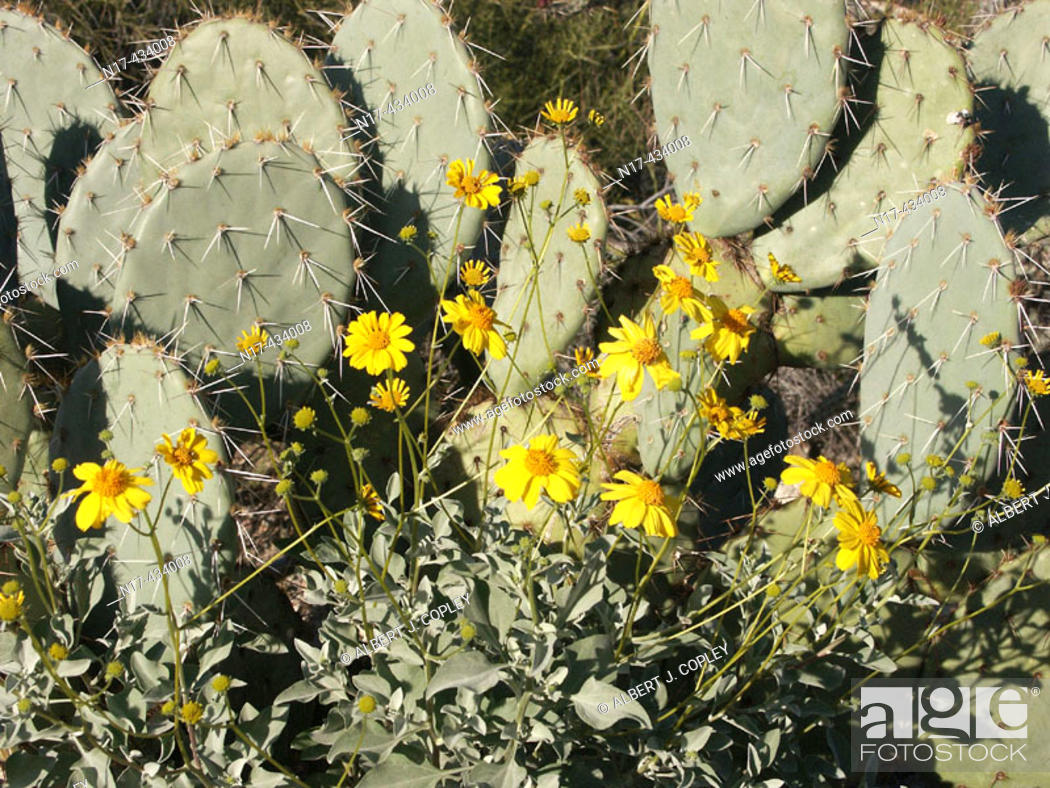 Stock Photo: Sonora Desert springtime, vegetation.