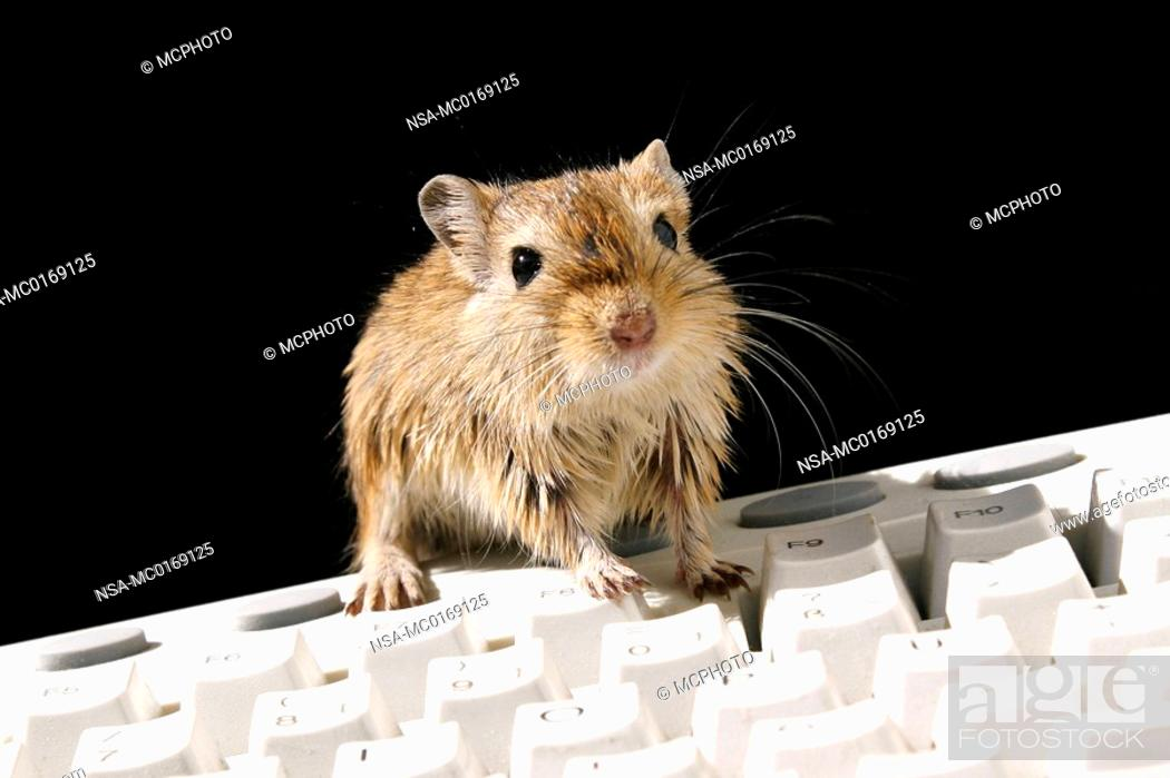 Stock Photo: mouse and computer.