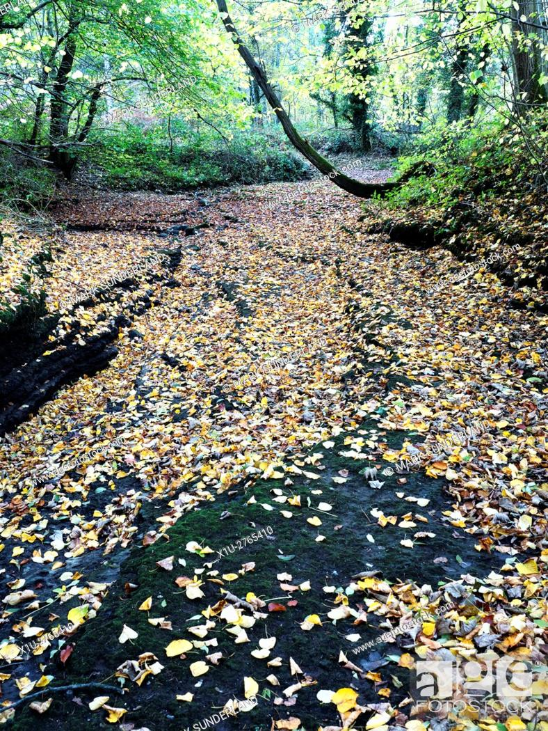 Stock Photo: Autumn Leaves on the Dry Riverbed of the River Skell in Chinese Wood near Studley Royal Ripon Yorkshire England.