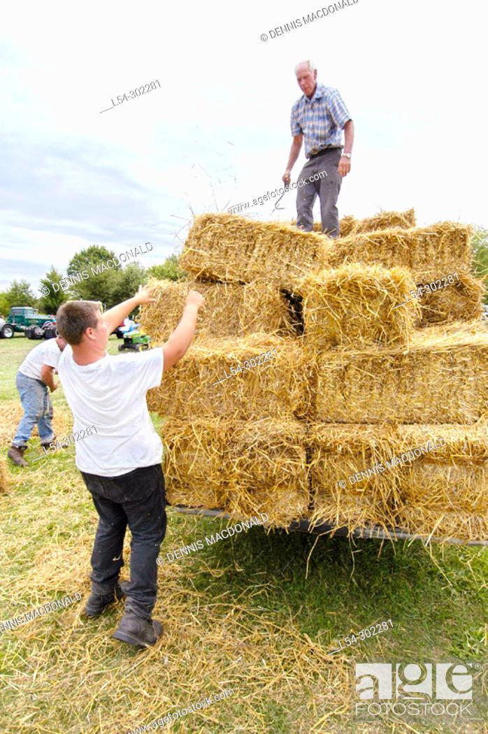 Stock Photo: Farmers grain trashing and hay bailing methods (c. 1917) reenactment.