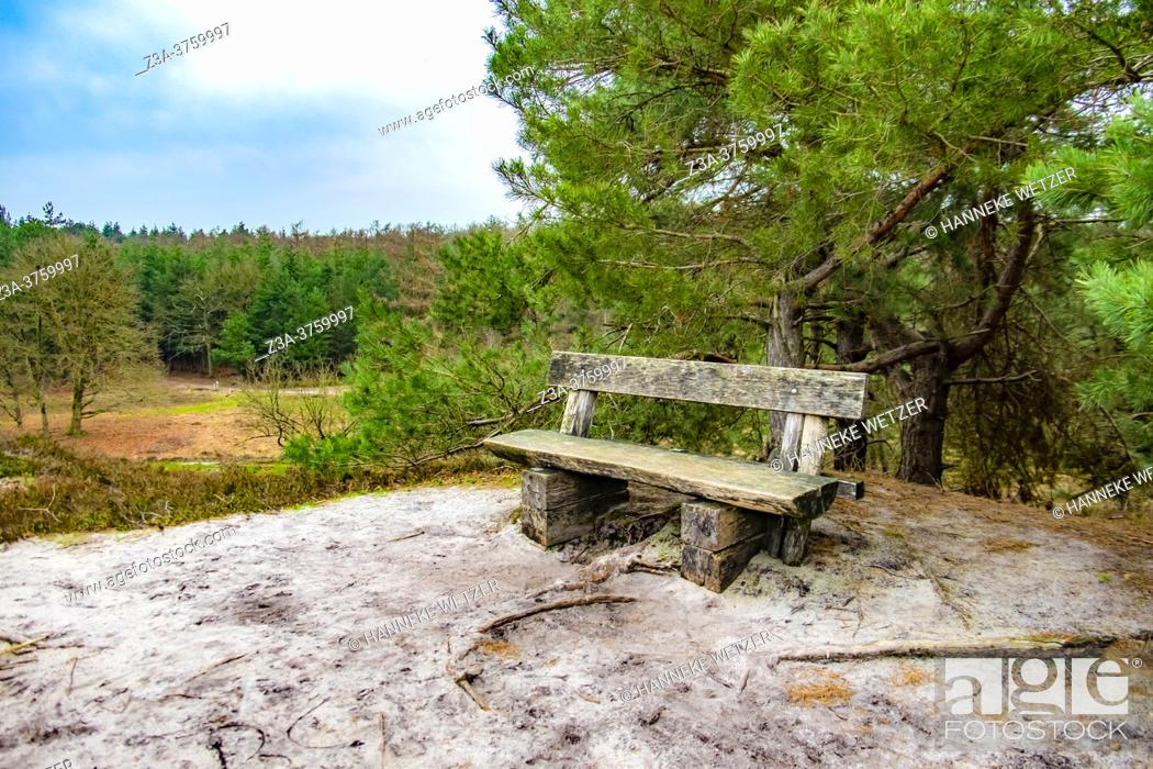 Stock Photo: Wooden bench in winter woods, The Netherlands, Europe.