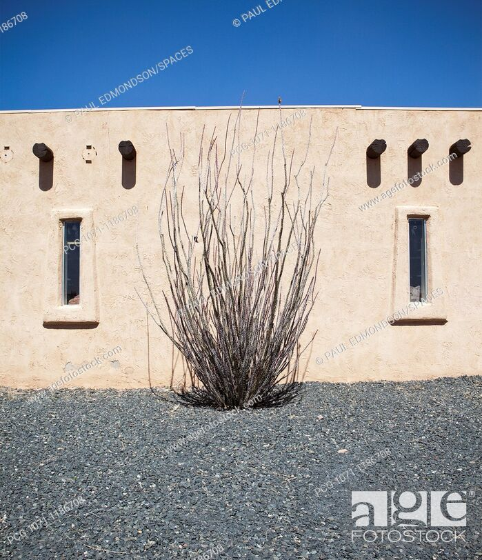 Stock Photo: Adobe Building and Ocotillo Cactus.