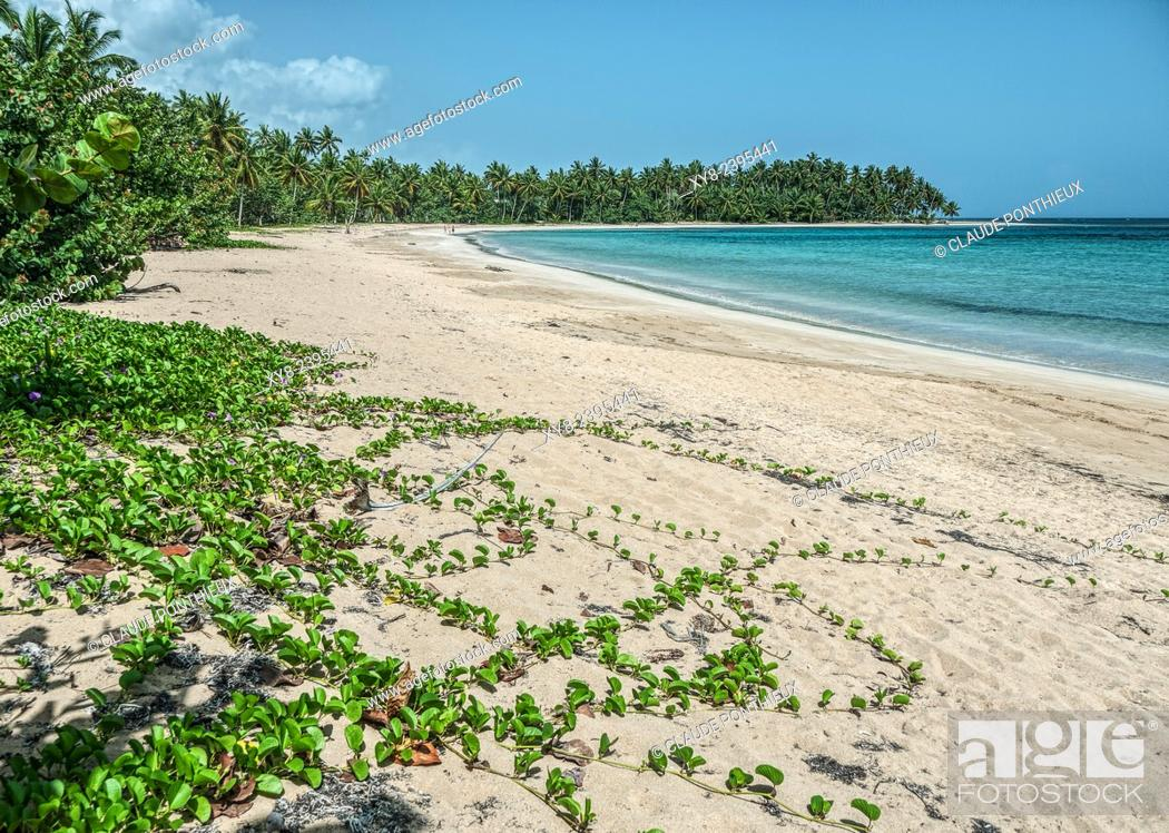Stock Photo: Beach, Samana, Dominican Republic.