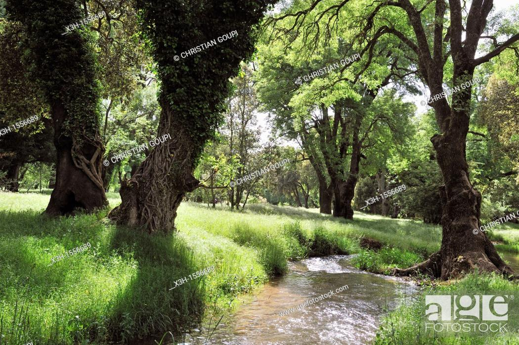 Stock Photo: river in the forest around Ifrane, Middle Atlas, Morocco, North Africa.
