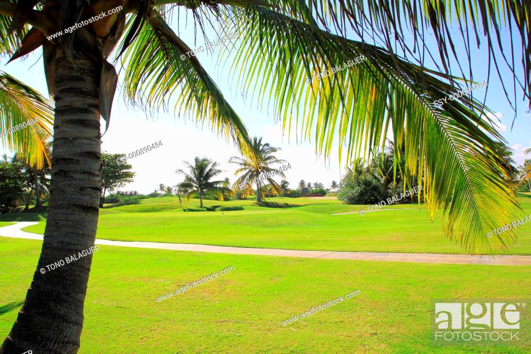 Stock Photo: golf course tropical palm trees in cancun Mexico.