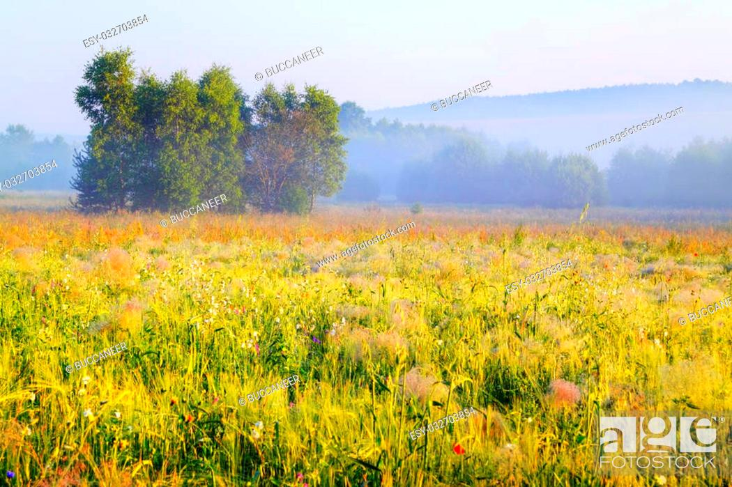 Stock Photo: A trees cluster in morning light with delicate fog over meadows. Poland, Swietokrzyskie.