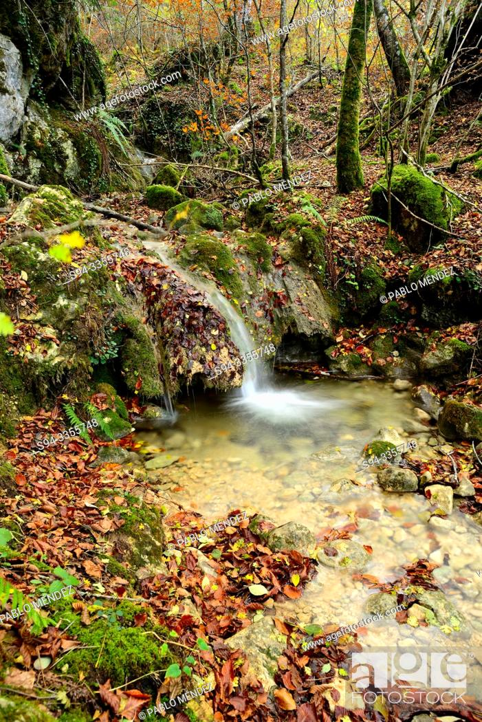 Stock Photo: Small waterfall in a beech wood of Andoin, Alava, Spain.