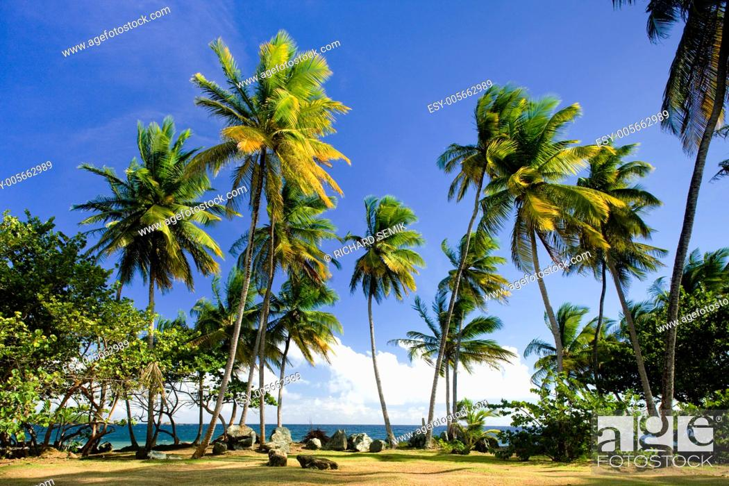 Stock Photo: Granby Point, Tobago.