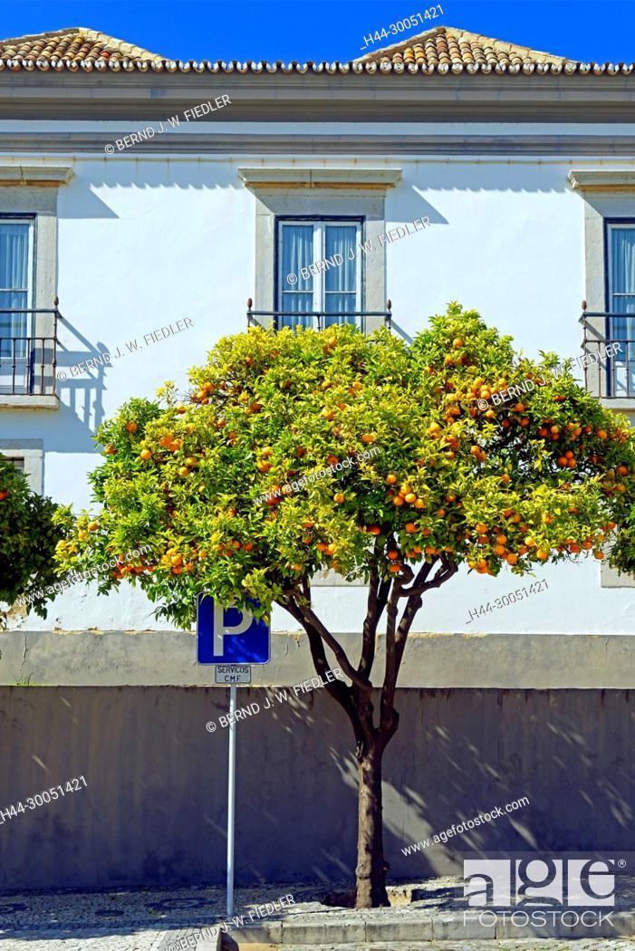 Stock Photo: Administrative building, orange tree, Faro Portugal,.