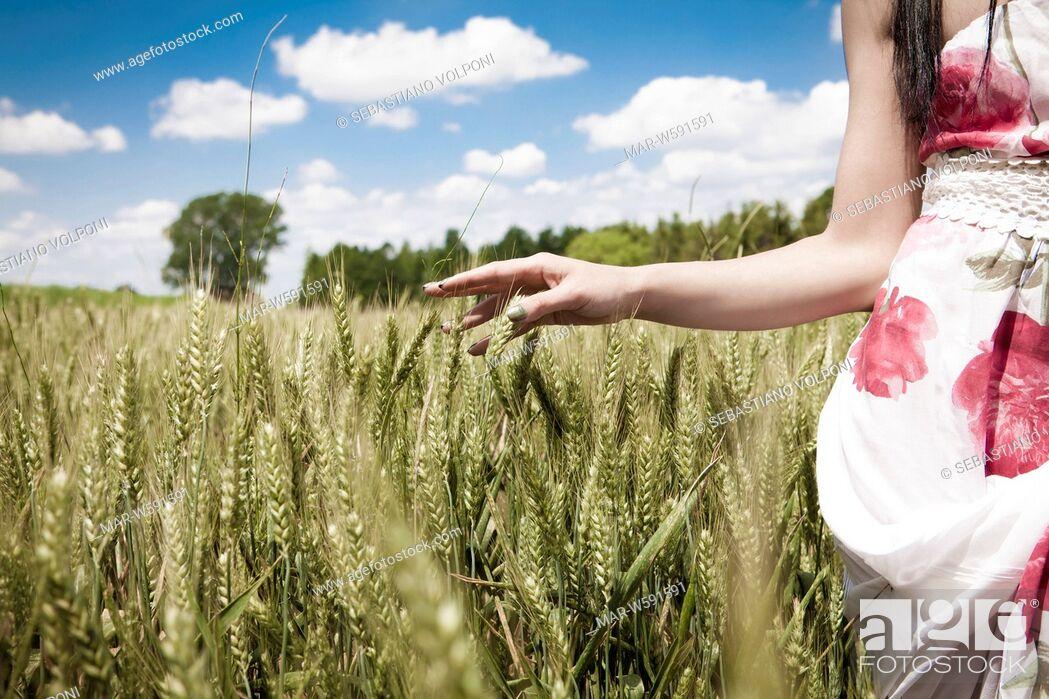 Stock Photo: woman in a wheat field.