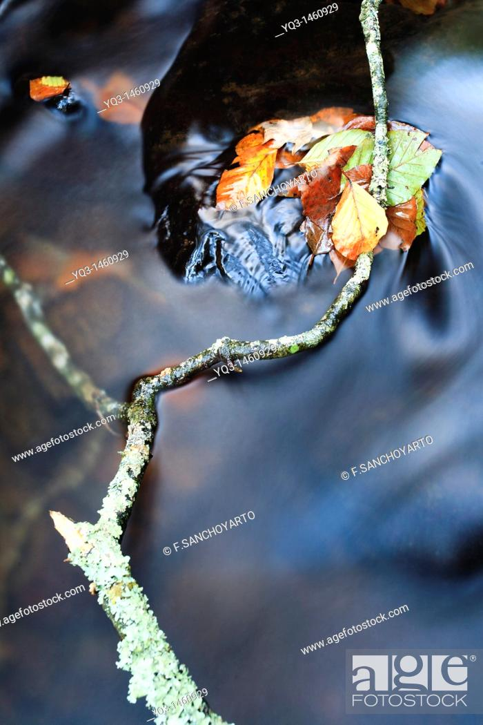 Stock Photo: Tree branch and leaves on Saja river in fall, Cantabria, Spain.