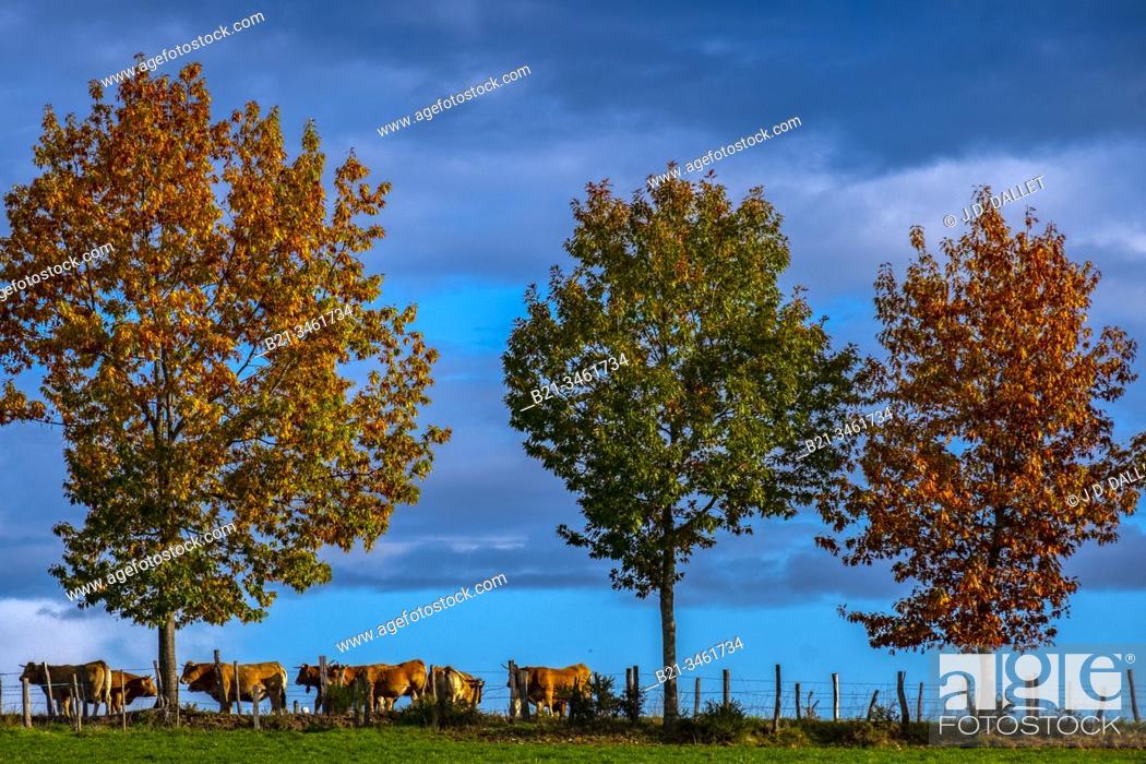 Stock Photo: France, Auvergne, Cantal, autumn near Quezac.