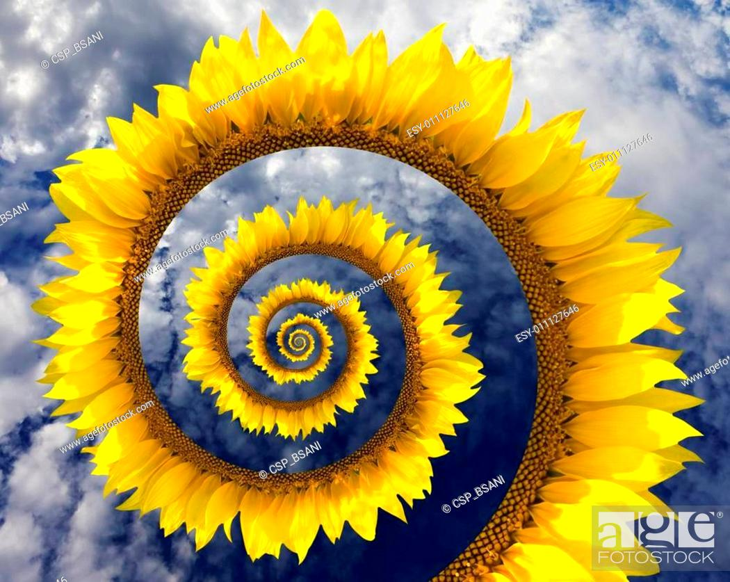 Stock Photo: Abstract sunflower spiral.