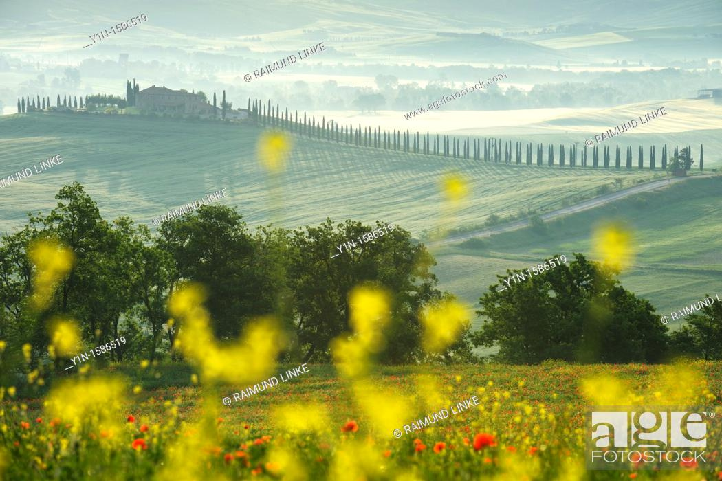 Stock Photo: Landscape with farmhouse at morning, Castiglione d' orcia, Val d' Orcia, Tuscany, Italy.