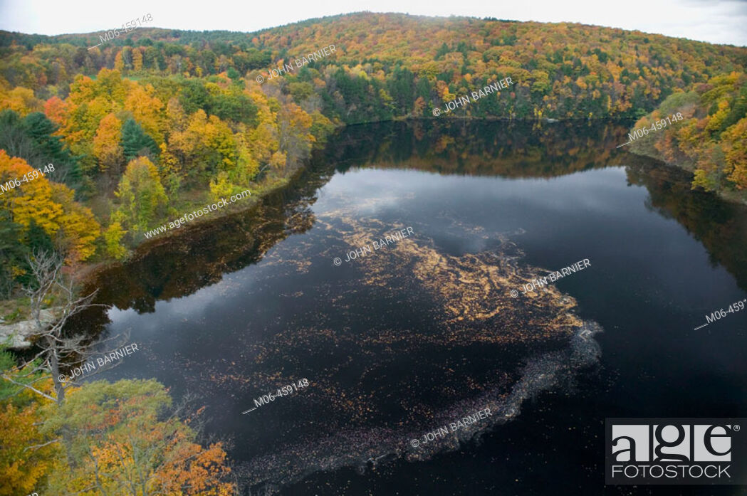 Stock Photo: Autumn Leaves in the Connecticut River. Tens of thousands of Autumn leaves moves down the Connecticut River in Western Massachusetts.