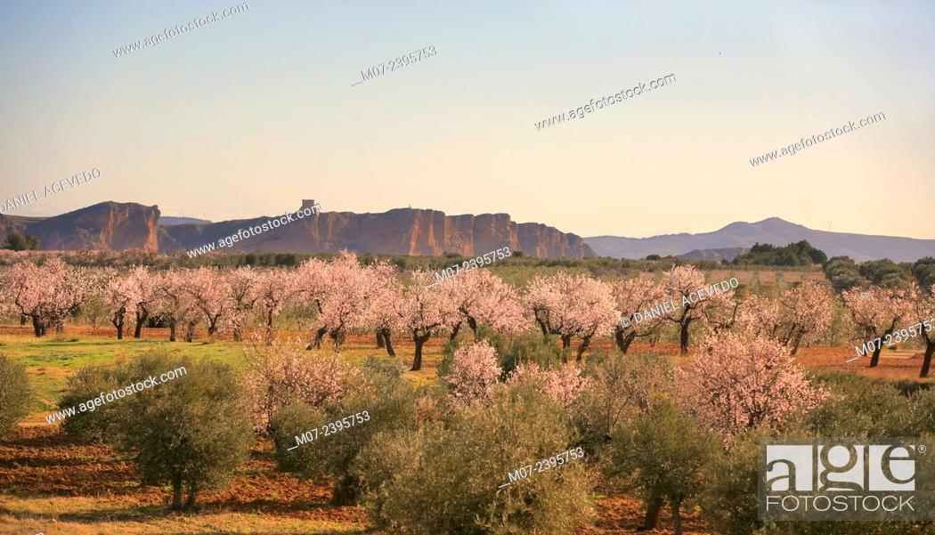 Imagen: Cidacos valley, Arnedo lands, Biosphere reserve, La Rioja, Spain, Europe.