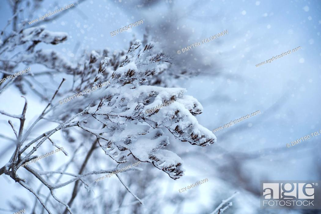 Stock Photo: Hazy fresh. Abstract seasonal backgrounds with pretty fresh weather.