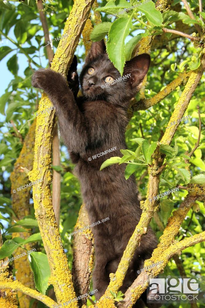 Stock Photo: domestic cat - kitten 67 days on tree.