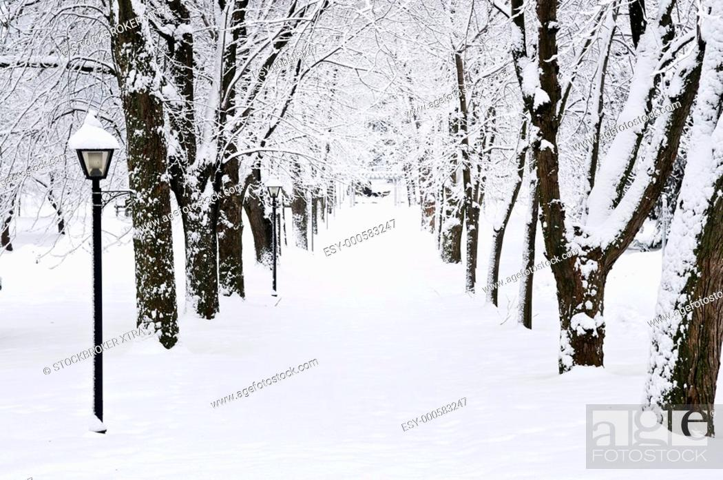 Stock Photo: Lane in winter park with snow covered trees.