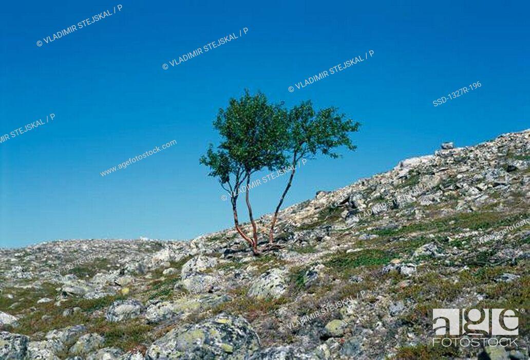 Imagen: Tree on a hillside, Czech Republic.