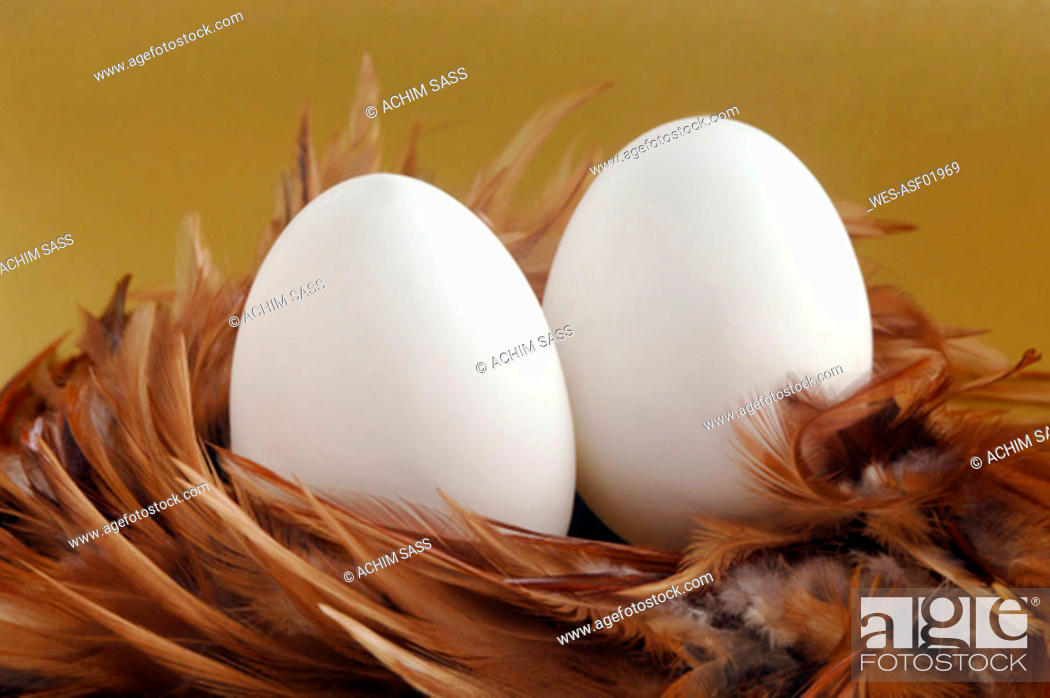 Stock Photo: Eggs in feather nest, close-up.