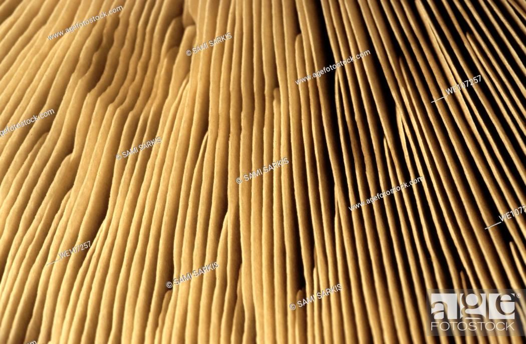 Stock Photo: Textured surface of a mushroom.