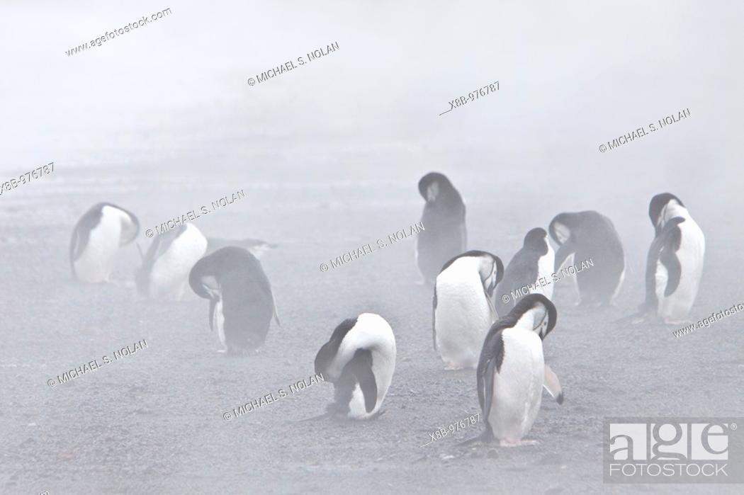 Stock Photo: Penguins on Deception Island. South Shetland Islands off the Antarctic Peninsula.