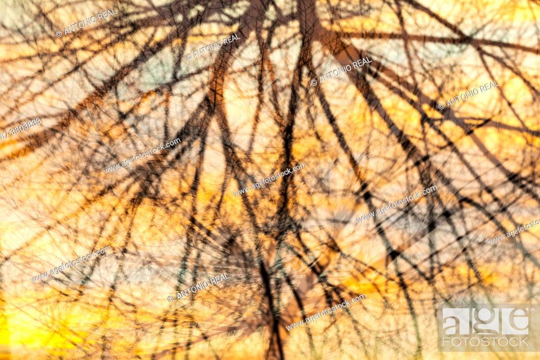 Stock Photo: Trees and clouds at sunrise. Almansa. Albacete province, Castile-La Mancha, Spain.