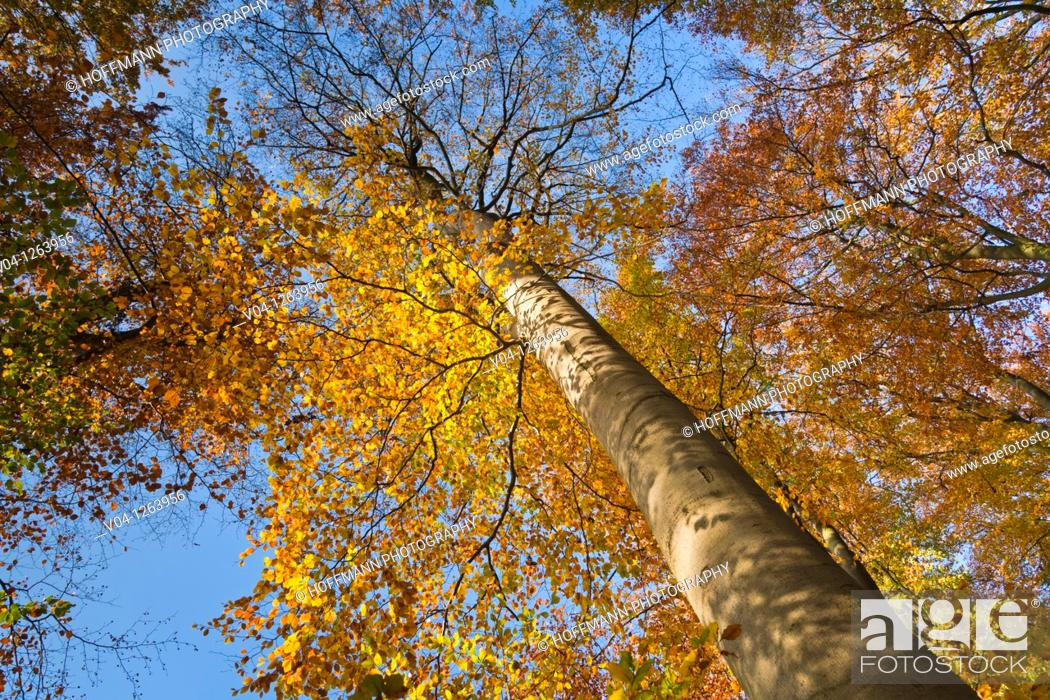 Stock Photo: Trees with leaves in autumn.