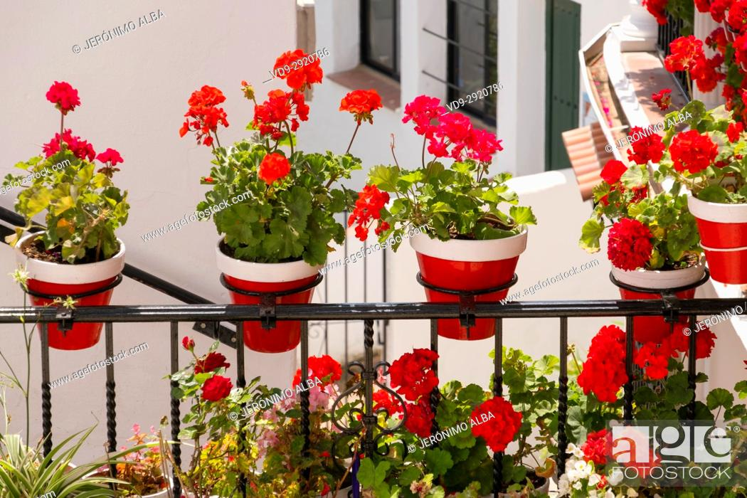 Stock Photo: Geranium flowers in a pot and street, typical white village of Mijas. Costa del Sol, Málaga province. Andalusia, Southern Spain Europe.