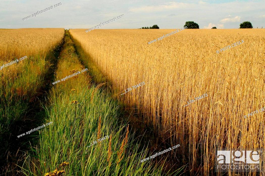 Stock Photo: Road in field, Poland.
