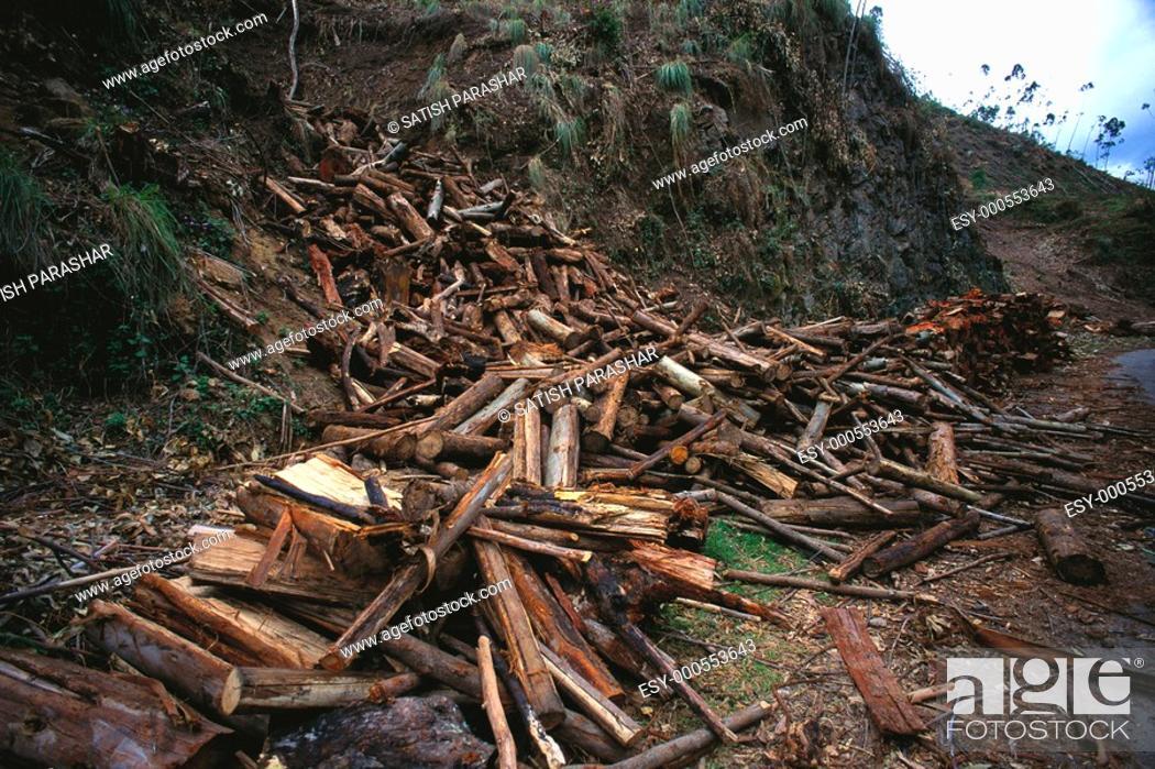 deforestation in western ghats