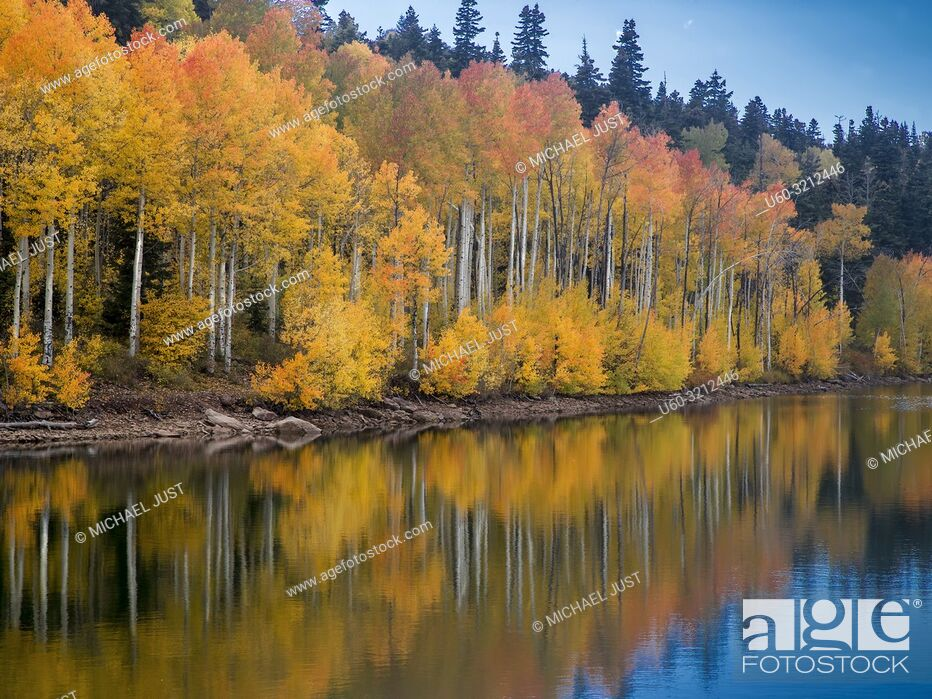 Stock Photo: Fall colors from Aspen trees are reflected in the still waters of Kolob Reservoir near Zion National Park, Utah.