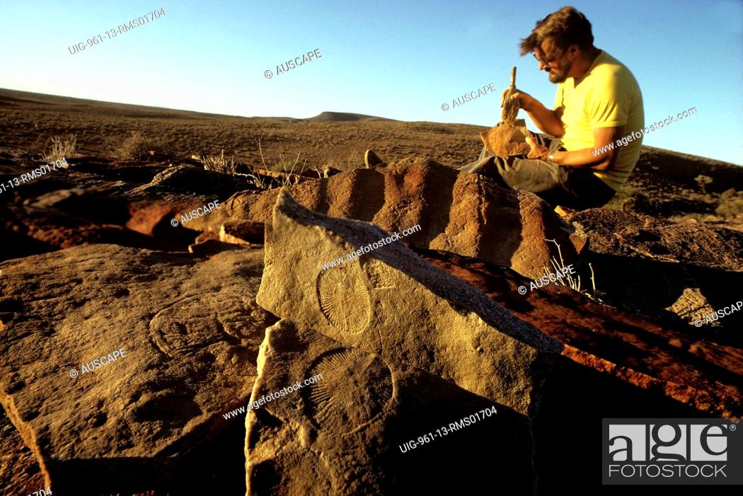 how to become a paleontologist in australia