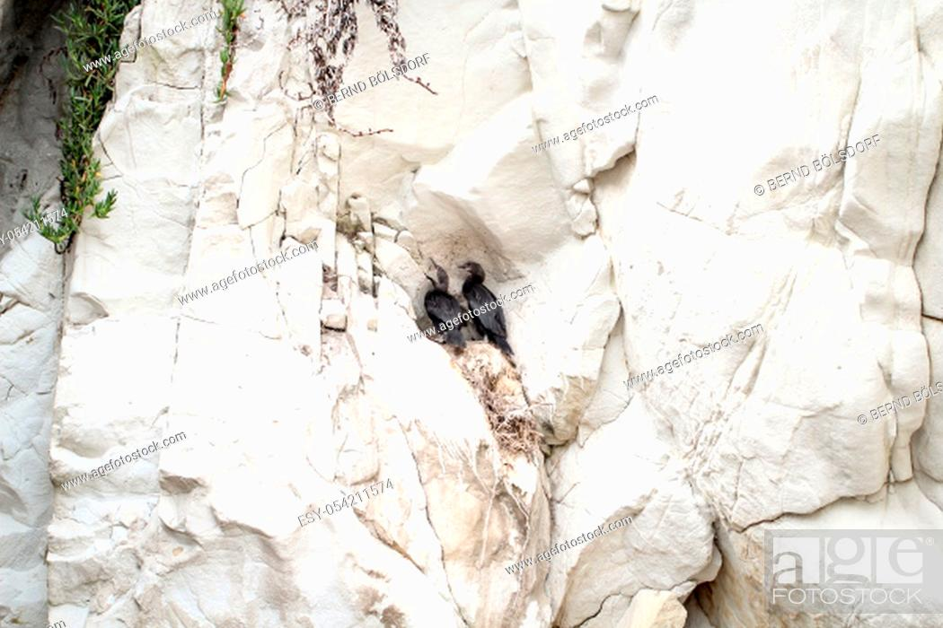 Stock Photo: Portrait of a cormorant.