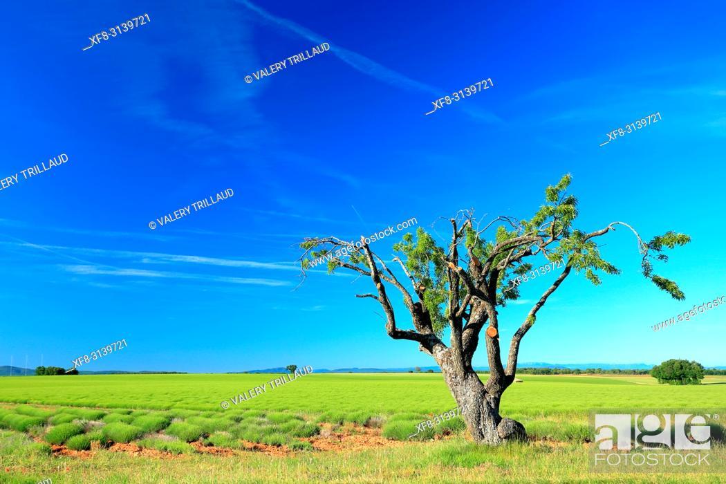 Stock Photo: Country landscape. Plateau de Valensole, Alpes de Haute Provence, 04, PACA, France.