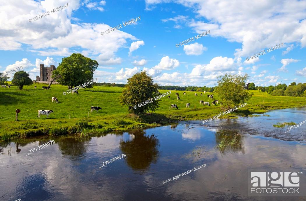 Stock Photo: Cattle below Bective Abbey, a Cistercian abbey on the River Boyne founded in 1147, but the remaining ruins primarily date to the 15th century, County Meath.