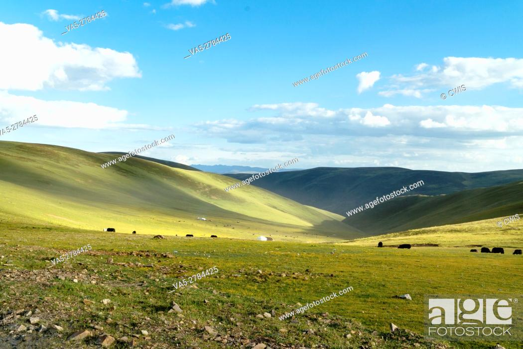 Imagen: Ganzi Prefecture, Sichuan province, China - Beautiful landscape of Tibetan Plateau with many yak.