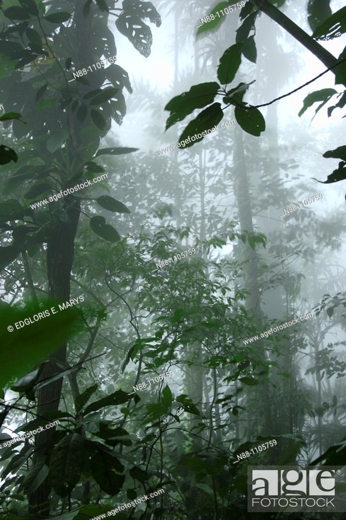 Stock Photo: Cloudy Forest, Henri Pittier National Park, Aragua, Venezuela, South America.