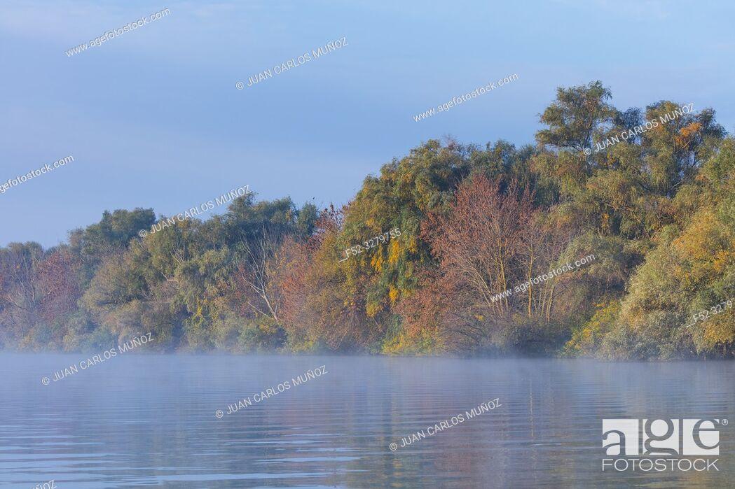 Stock Photo: Mist on a shallow channel, Danube Delta, UNESCO WORLD HERITAGE, Tulcea County, Romania, Europe.