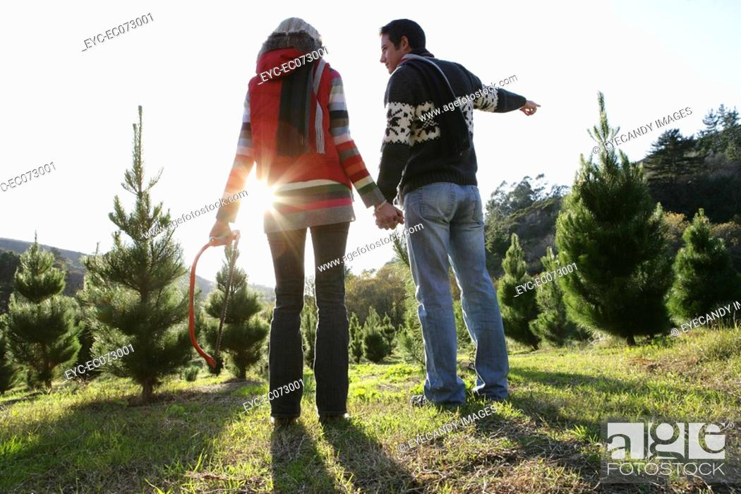 Stock Photo: Young couple looking at Christmas trees.