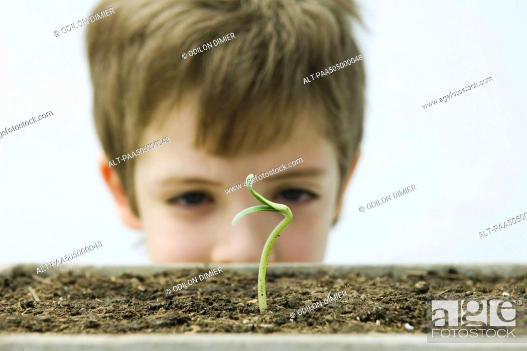 Stock Photo: Boy looking at seedling, cropped view.