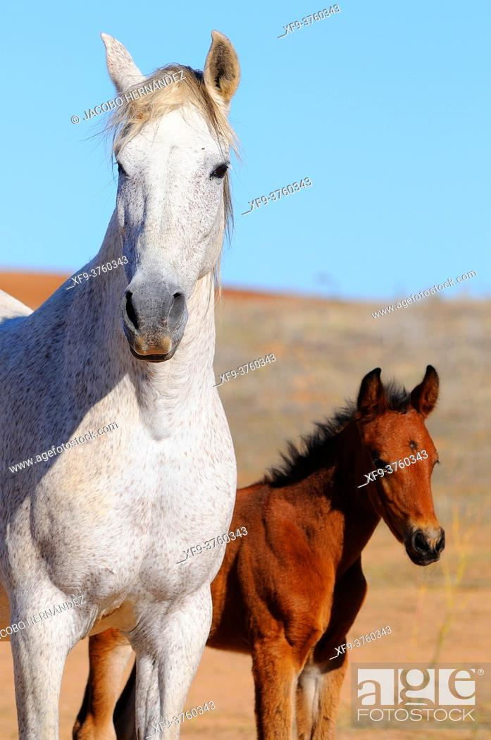 Stock Photo: Mare with her foal.Badajoz province. Extremadura. Spain.