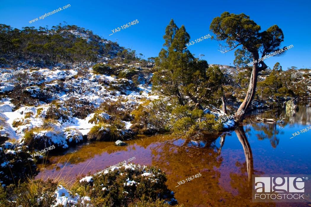 Stock Photo: Australia, Tasmania, Cradle Mt - Lake St Clair National Park  Native bush reflected in the Wombat Pool on the Overland Track.