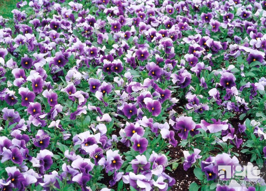Stock Photo: background, flower, plants, plant, film.